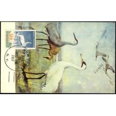 1098 NIM Tulane; PPC; New York, NY; Wildlife Conservation / Whooping Crane